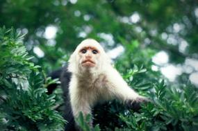 Best of Costa Rica's National Parks tour