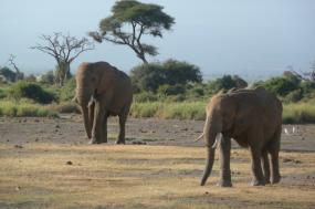 7 days 6 nights Nairobi – Amboseli – Tsavo – Diani