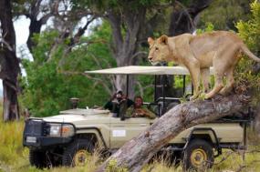 The Explorer Safari