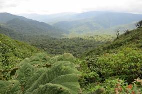 Essential Costa Rica Tour