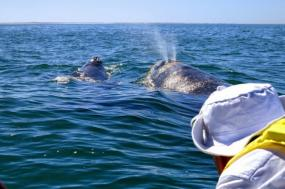 Magdalena Bay Whale Watching tour