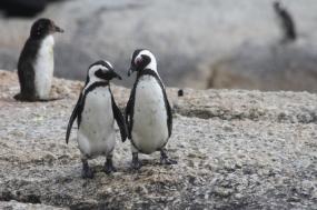 Antarctica Cruise Expedition