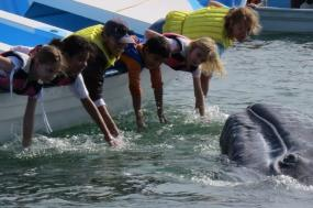 San Ignacio Whale Watching tour