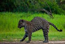 Land of the Jaguar tour