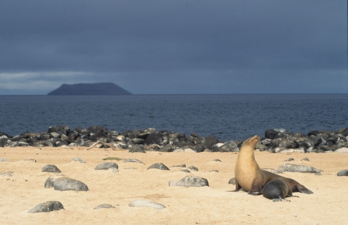 Galapagos Islands Family Adventure tour