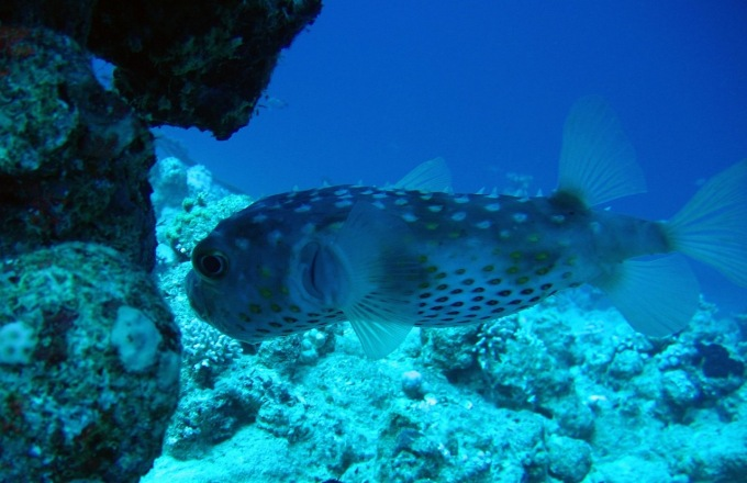 Belize: Reefs, Rain Forests, and Ruins tour