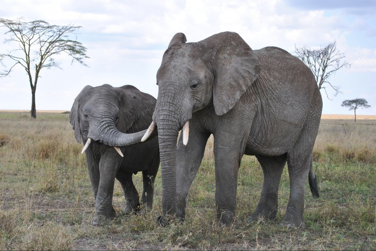 Elephants view at Tanzania, Africa