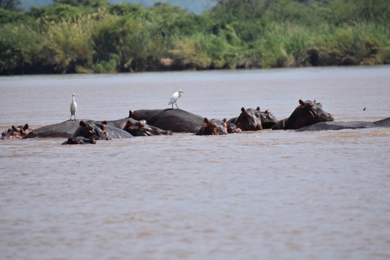 River nature view at Zambezi, Africa_P