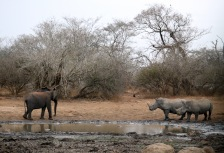 Kruger National Park, South Africa Attractions