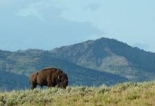 Yellowstone National Park tour