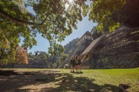 Mayan Discovery tour