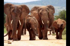 South Africa Lodge Safari tour