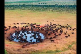 Serengeti  Lodge Safari tour