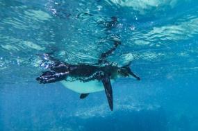 Galápagos — Central Islands aboard the Xavier III tour