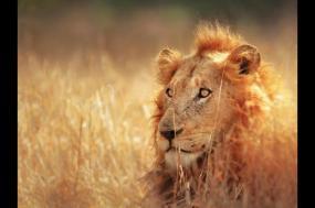 Zululand and Kruger Wildlife + Cape Escape tour