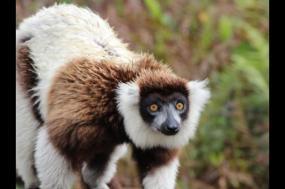 Madagascar Wilderness Trek tour