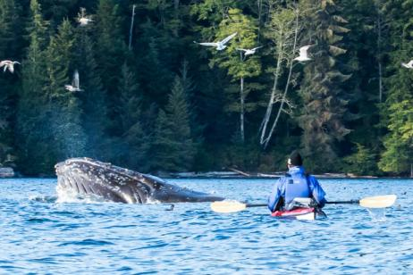 Orca & Humpback Expedition tour