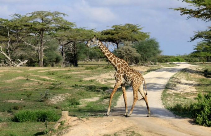 10 Day Deluxe Senior Safari tour