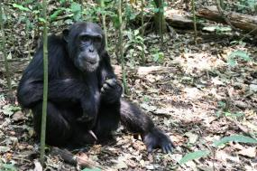15 Days Best of Uganda Safari tour