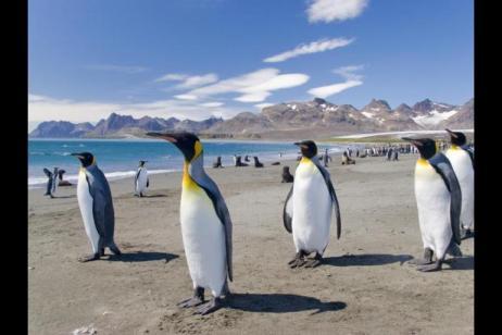 Sub-Antarctic Safari - M/V Polar Pioneer tour