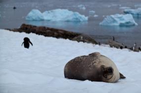 Antarctic Express Air-Cruise tour