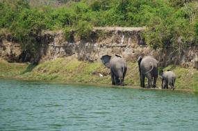 12 Days Uganda Primate and Wildlife Safari tour