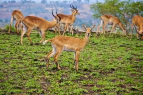 Wild Uganda tour