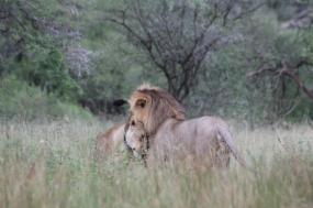 3-Days Safari (Lake Manyara / Ngorogoro / Tarangire National Park)