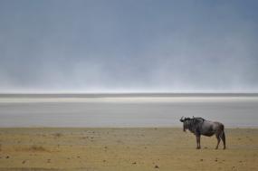 4 Days: Lake Manyara – Serengeti – Ngorongoro Crater