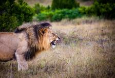 South Africa Highlights & Safari tour