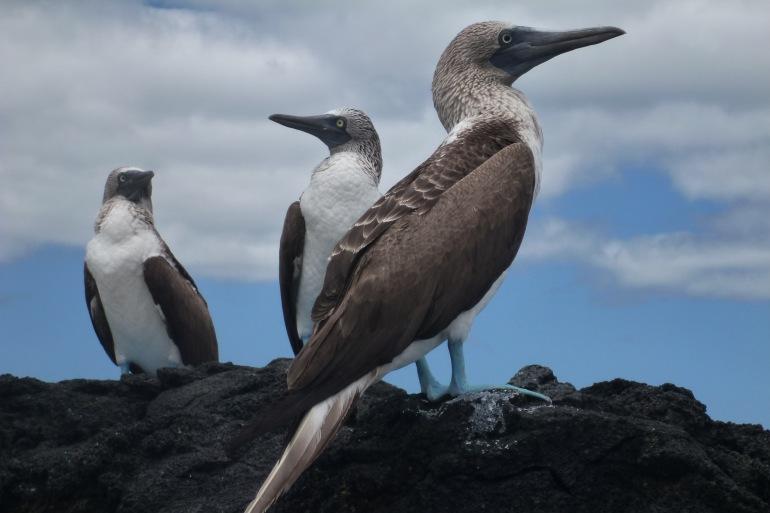Isabela Island San Cristobal Galapagos Unbound Trip