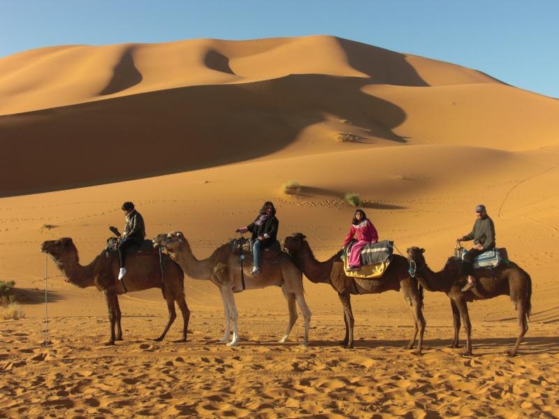 Camels on Sahara
