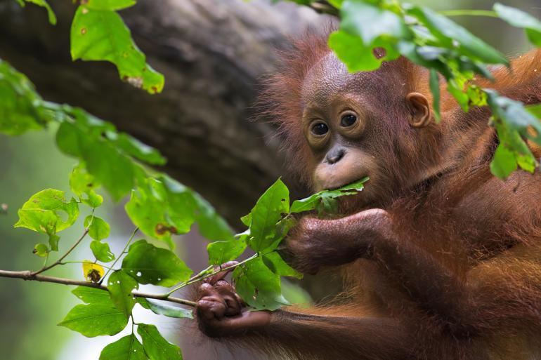 Borneo Mount Kinabalu Borneo Wildlife Discoverer Trip
