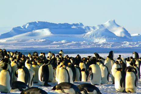Antarctica Expedition Cruise Emperors And Kings tour