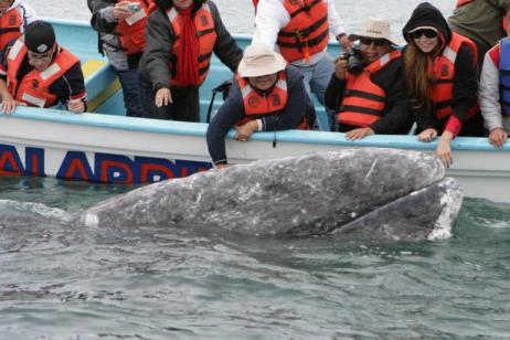 Gray Whales, Sea Turtles & National Parks of Baja California Sur tour