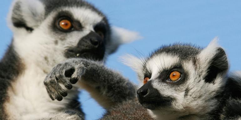Highlights of Madagascar tour