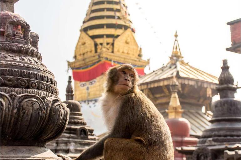 Agra Chitwan National Park Kathmandu to Delhi Trip