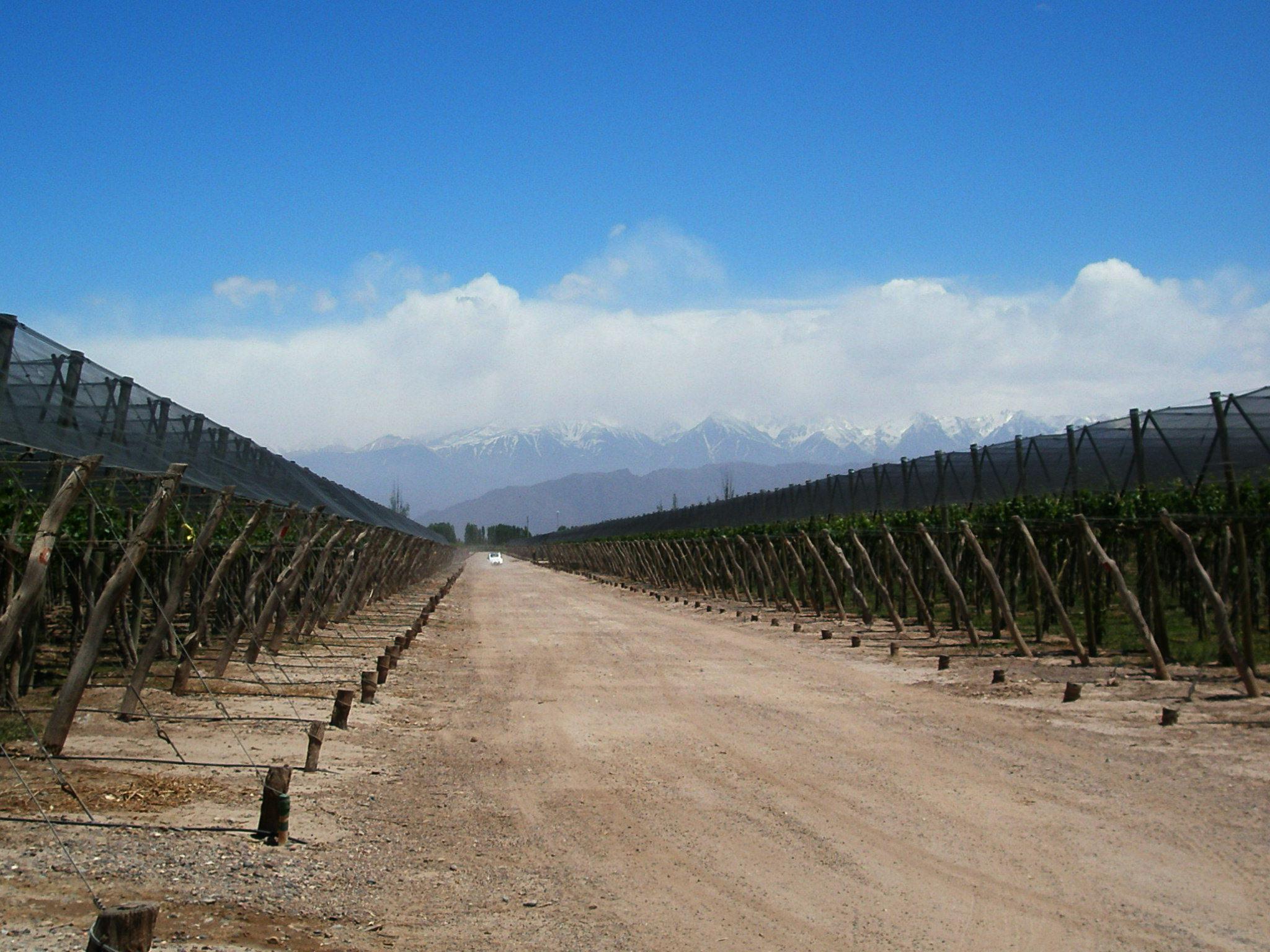 Andes Mountains Mendoza Mendoza/ Andes & Wine Trip