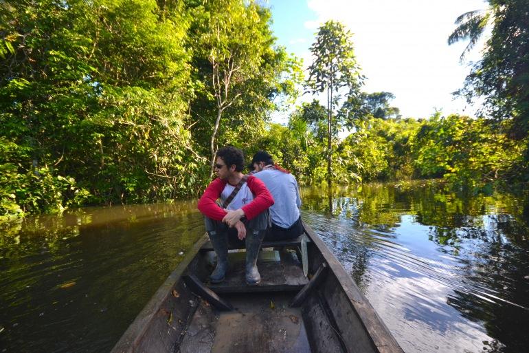 Nature View at Amazon Jungle, Brazil