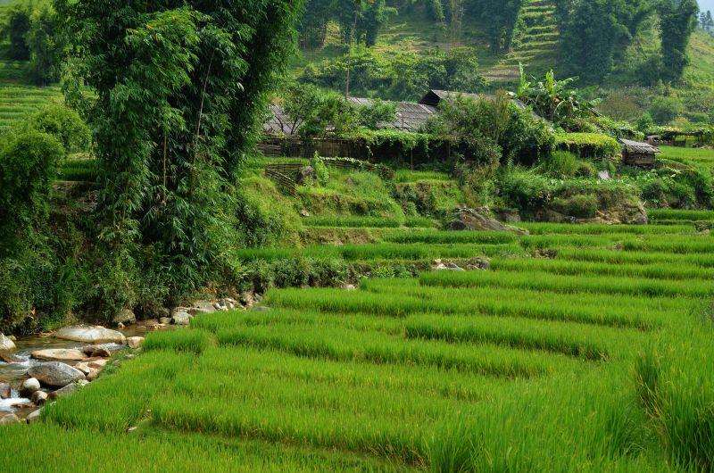 Thailand fields