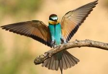 Birding Attractions