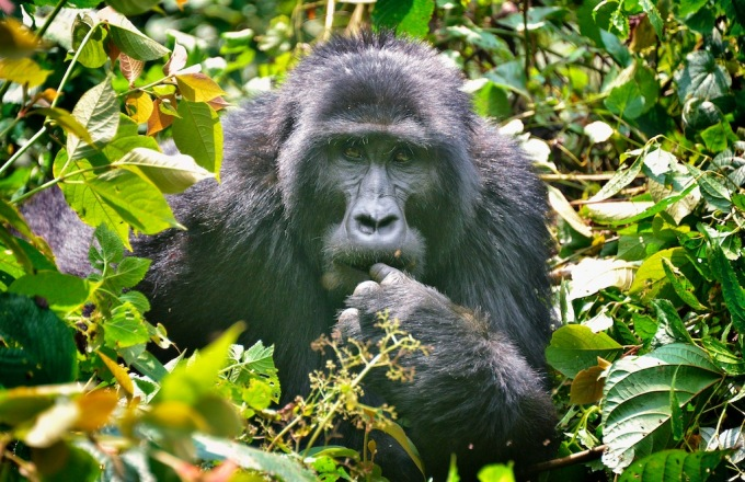 Uganda: The Pearl of Africa tour