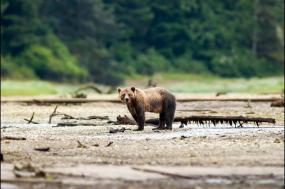 Whales & Bears of British Columbia tour
