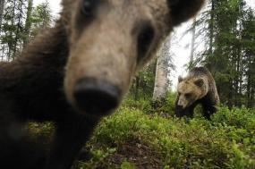 Brown Bear Encounter Special tour