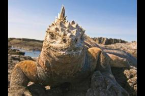 Galapagos Extension - Central Islands     tour