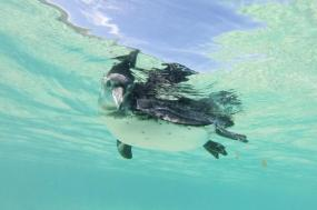 Galapagos Wildlife Cruise tour