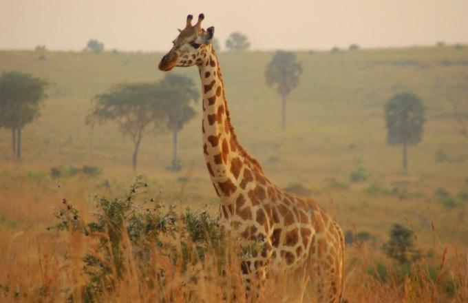 Uganda Explorer tour