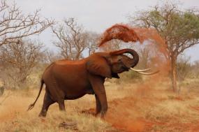 Tanzania: Wildlife Adventure Walking Safari tour