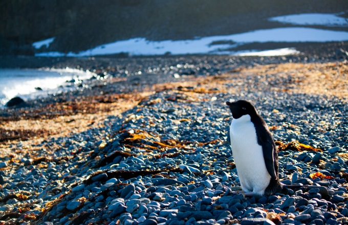 Across the Antarctic Circle tour