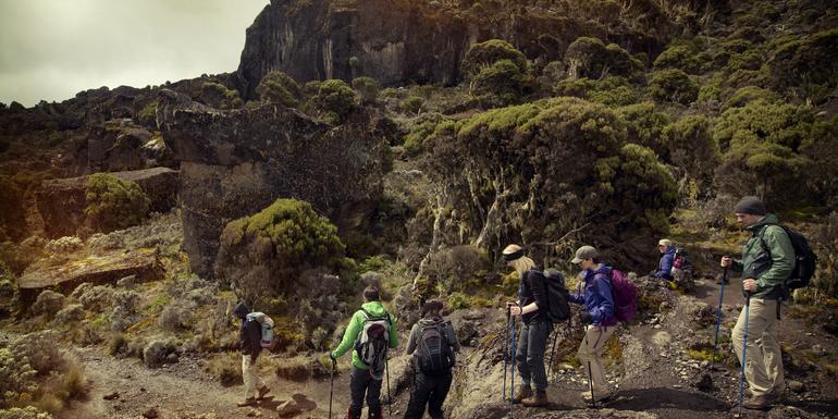 Mt Kilimanjaro Trek - Machame Route (8 Days) tour